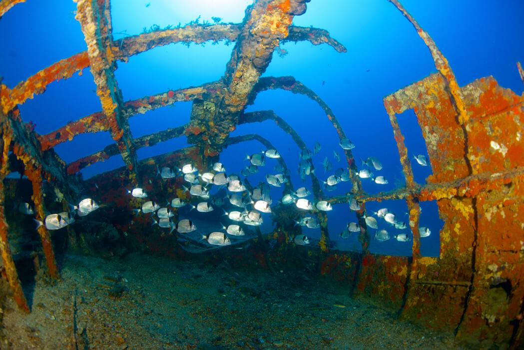 un banc de Sars dans les eaux de la méditérranée