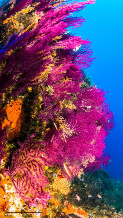 les fonds marins de la méditérannée