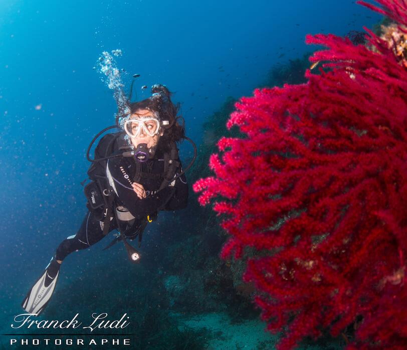 découvrir les coraux de la méditérranée avec Mio Palmo plongée