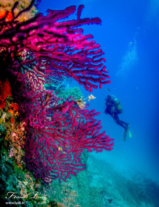autre vue des coraux de la méditérranée avec Mio Palmo plongée
