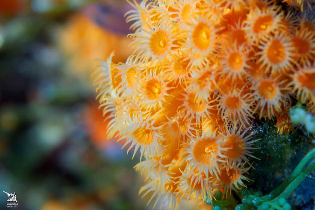 zoom sur un corail magnifique