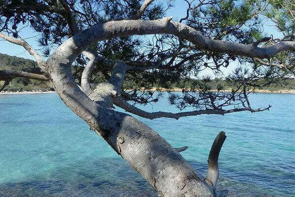 La nature maritime à porquerolles