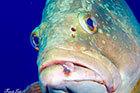 Un poisson de la baie de Cavalaire