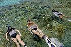 Snorkeling en groupe dans les eaux transparentes de Port-Cros