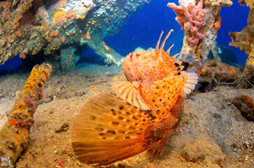 Découvrez les fonds sous-marins pendant un week end dans le Var
