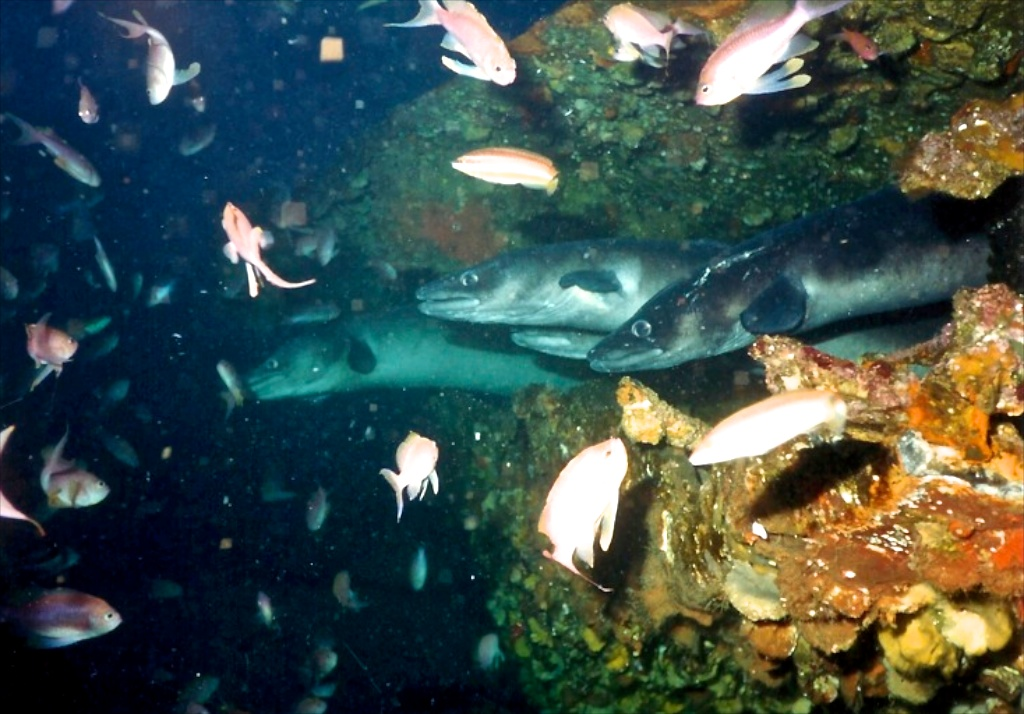 Plongée la barge aux congres à Port Cros dans le var