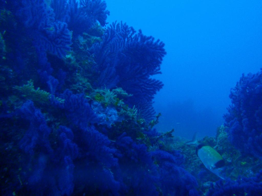 Site de plongée porquerolles le rocher de médes