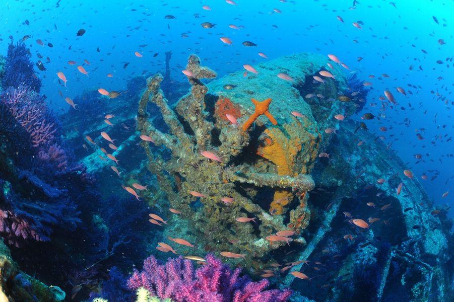 Plongée sous marine épave le donator à Porquerolles var paca