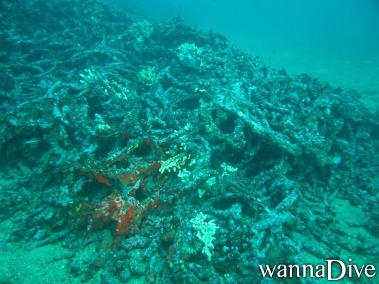 vue des filets anti sous marin de porqurolles en plongée bouteille PADI