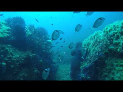 superbe plongée débutants padi à Porquerolles dans le var Hyères