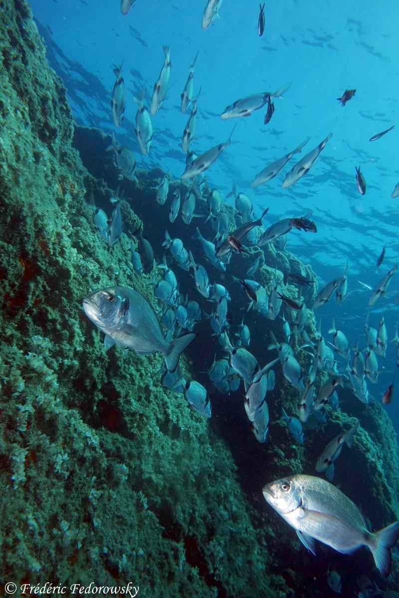 Plongée sur des roches superbes à Port Cros TOULON
