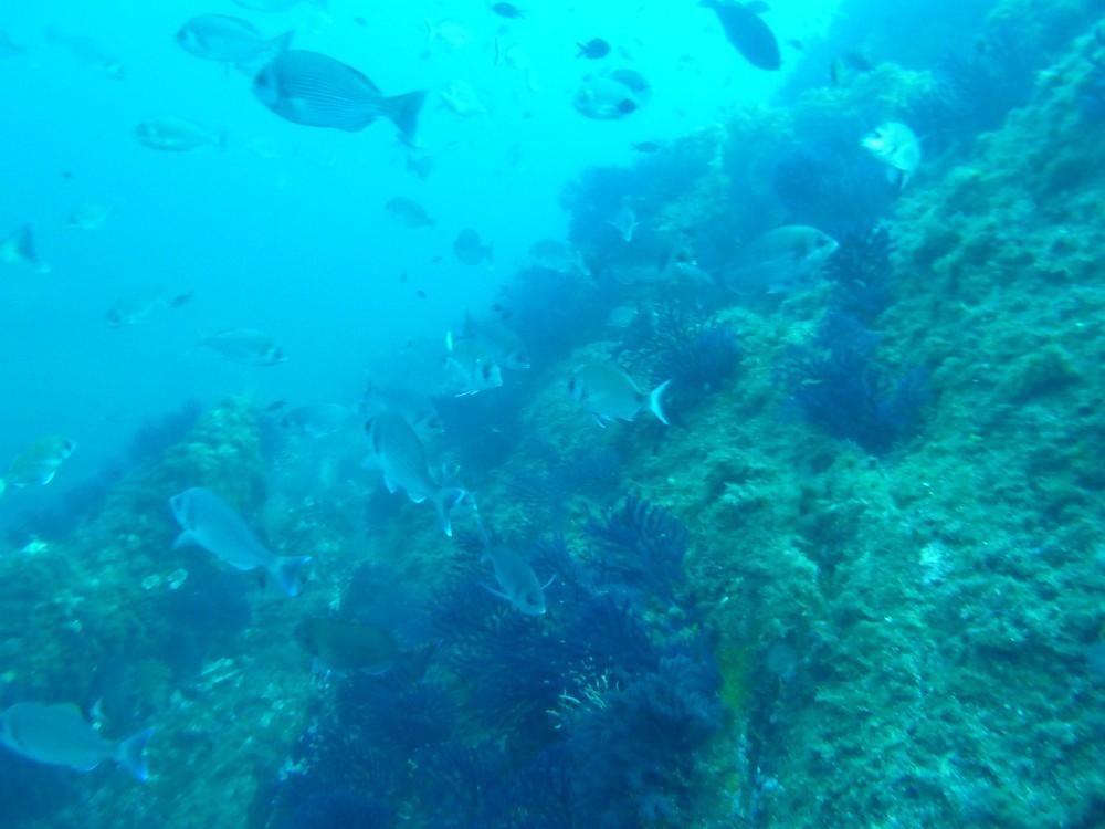 Site à mérous pour plongée à Porquerolles le sec du Langoustier