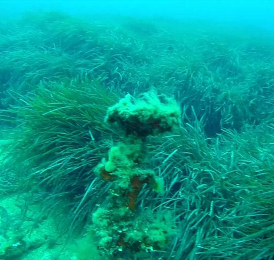 Plongée sous marine épave Tell Roche Fouras  à Cavalaire-sur-Mer