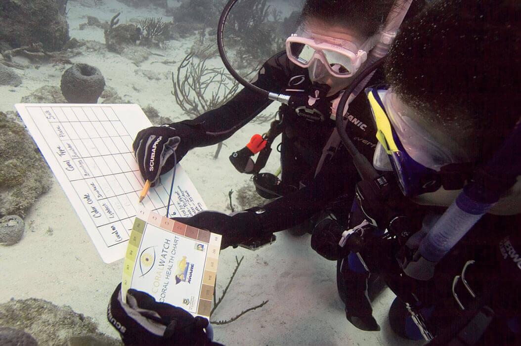 Apprentissage pour réppertorié un site de plongée à Hyères